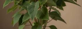 (C) Plants4Present